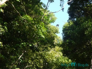 Perhentian Islands - Jungle Trail