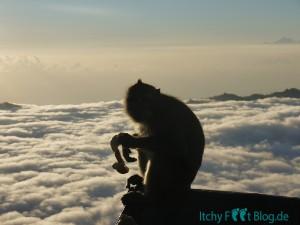 Die Affen auf dem Vulkan