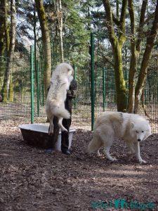 Begrüßung im Wolfsgehege