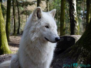 Wolfcenter Dörverden - Besuch im Gehege